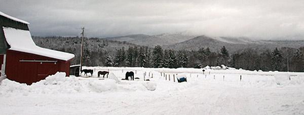 peasefarm_winter